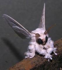 La photo d'un étrange papillon de nuit intrigue les chercheurs | Neurosciences, la science qui avance | Scoop.it
