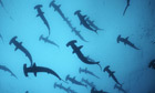 The Sea: the first wonder of the world – in pictures | What Surrounds You | Scoop.it