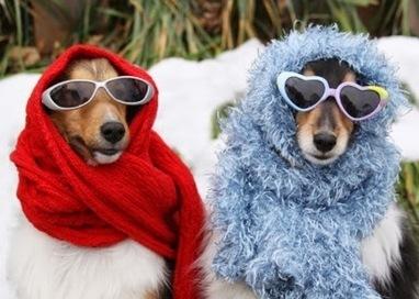 Diện đồ cho chó vào mùa đông - Thức ăn cho thú cưng | nanapet | Scoop.it