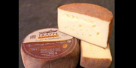 Le trappe d'Echourgnac, fromage du Périgord, est en rupture de stock partielle | Agriculture en Dordogne | Scoop.it