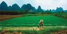 Science: Losing Arable Land, China Faces Stark Choice: Adapt or Go Hungry | my universe | Scoop.it