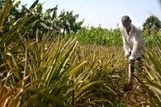 FAO - News Article: Climate-smart farming takes root in Kenya | Climate Smart Agriculture | Scoop.it