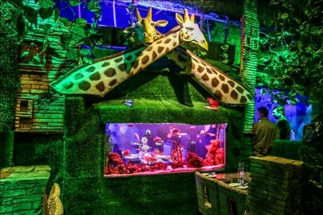 Jungle Jamboree – Jungle & Aqua Themed Restaurant, Gurgaon | Interior Designing Services | Scoop.it