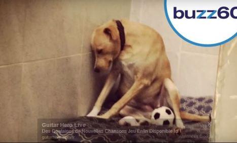 Lana, le chien le plus triste du monde a trouvé une famille d'accueil (vidéo) | CaniCatNews-actualité | Scoop.it