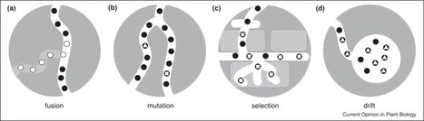Genome diversity in arbuscular mycorrhizal fungi | Biologie Intégrative | Scoop.it