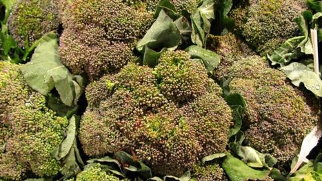 Broccoli may trump genetics when it comes to arthritis | Vitae Herbae (herbal, natural, integrative medicine  & health) | Scoop.it