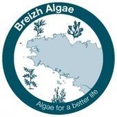 Breizh Algae Invest valorise les algues - Portail Bretagne Innovation   The Blue Industrial Revolution   Scoop.it