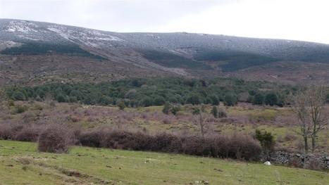 Sabinar de Sigueruelo y Acebeda de Prádena (Segovia). 12 Junio | Actualidad forestal cerca de ti | Scoop.it