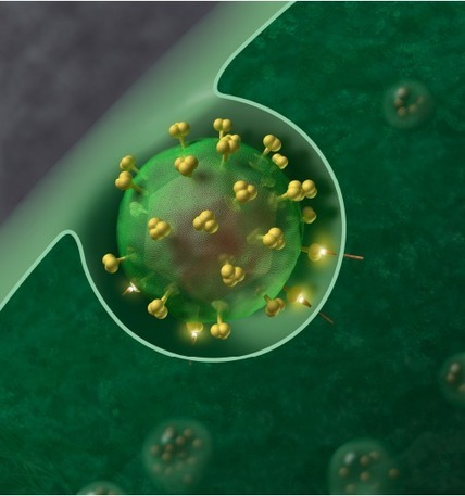 Scientists eliminate the HIV virus from cultured human cells for first time | leapmind | Scoop.it