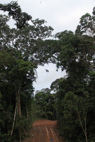 Canopy crusade: world's highest network of camera traps keeps an eye on animals impacted by gas project | Rainforest EXPLORER:  News & Notes | Scoop.it