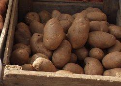 Cómo cultivar patatas en Somalia - ¡Cuánta Ciencia! | All About Food | Scoop.it