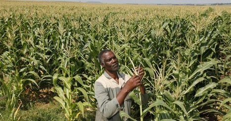 How Africa can make the next quantum leap in agriculture | Youth, Agriculture and Food Security | Scoop.it