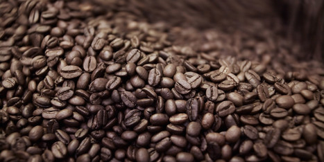 Coffee Can Replace Plant Fertilizer, Deodorizer And More | GMOs & FOOD, WATER & SOIL MATTERS | Scoop.it