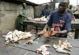 11 arrested for serving human meat at Nigerian hotel restaurant: report  | Littlebytesnews Current Events | Scoop.it