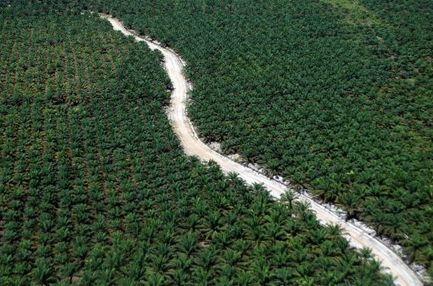 Malaisie: les lobbies viennent à Paris pour défendre l'huile de palme | Chronique d'un pays où il ne se passe rien... ou presque ! | Scoop.it