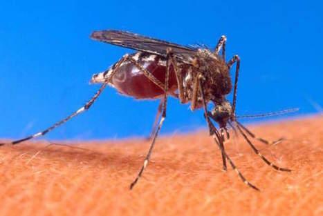 Sbarca a Genova la zanzara tigre coreana. Monitoraggio regionale sul virus Zika | Medic | Scoop.it