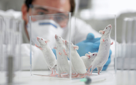 How flu infected mice could mean end of blood transfusions | Host Cell & Pathogen Interactions | Scoop.it