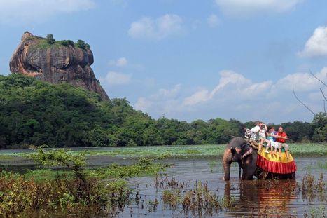 Tourisme éthique : les activités à éviter pour ne pas encourager la souffrance animale | Parent Autrement à Tahiti | Scoop.it