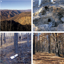 Ectomycorrhizal fungal spore bank recovery after a severe forest fire: some like it hot | Emerging Research in Plant Cell Biology | Scoop.it