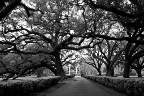 Oak Alley Plantation | Adventurous Kate | Oak Alley Plantation: Things to see! | Scoop.it