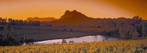 2015 Vintage Report: South Africa | Vitabella Wine Daily Gossip | Scoop.it