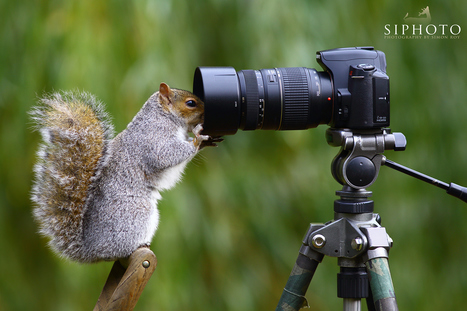 Let me take another selfie by Simon Roy   I didn't know it was impossible.. and I did it :-) - No sabia que era imposible.. y lo hice :-)   Scoop.it