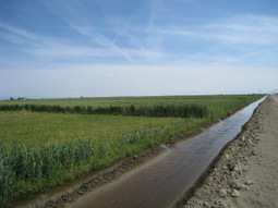Stricter Controls Of Wastewater Reuse On Crops Needed To Meet WHO Guidelines | Environmental Safety | Scoop.it