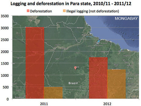 Illegal logging remains rampant in Brazil | Environment and Conservation News | Scoop.it