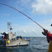 Gwénaël, le petit pêcheur breton en quête d'Europe | ECONOMIES LOCALES VIVANTES | Scoop.it