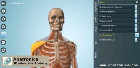 Anatomy 3D - Anatronica   huesos   Scoop.it
