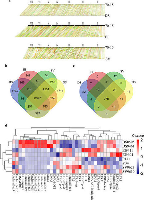 Directional Selection from Host Plants Is a Major Force Driving Host Specificity in Magnaporthe Species | Rice Blast | Scoop.it
