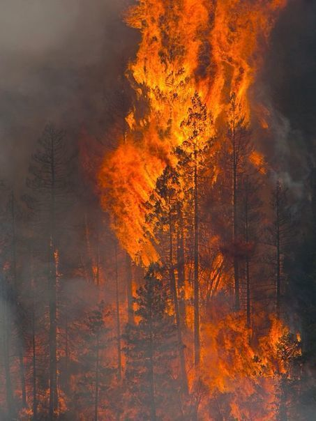 Arizona could see an intense wildfire season this year | Arizona Republic | CALS in the News | Scoop.it