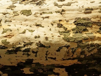 Old Wood Tree Bark Texture | Paper Backgrounds | Backgrounds and Textures | Scoop.it