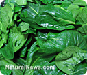 Spinach influences gene expression to cut colon cancer risk in half | Longevity science | Scoop.it