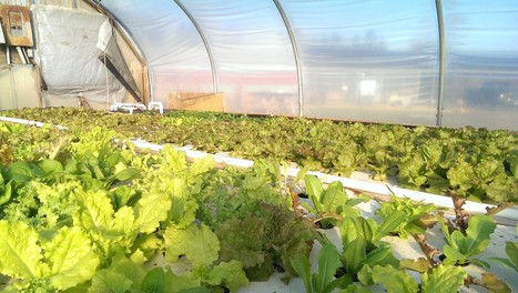 Museum of Natural History Activity Explores Aquaponic Farming | Aquaponics in Action | Scoop.it