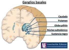 Asociación Educar - Ciencias y Neurociencias aplicadas al ... | Neurociencias | Scoop.it