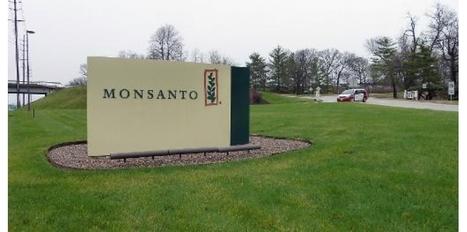Même sans OGM, la France reste une priorité pour Monsanto   Abeilles, intoxications et informations   Scoop.it