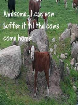 Be Awesome And Buffer Your Shares Til The Cows Come Home | Inspiring Social Media | Scoop.it