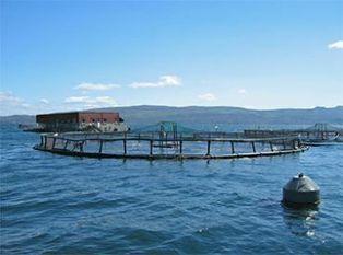 Marine currents charts could help fish farmers deal with diseases - FIS | Aquaculture (Global Aqua Link) | Scoop.it