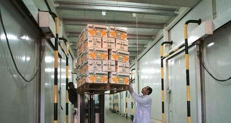 How to stop the rot in our obsolete cold chains | Finance | Scoop.it