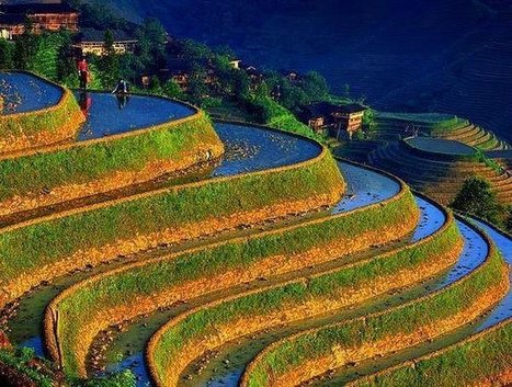 20 Incredible Pictures Of Rice Terraces From Above | Global Affairs & Human Geography Digital Knowledge Source | Scoop.it