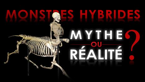 [Vidéo] Monstres hybrides : mythe ou réalité ? | | Science de comptoir - ISSN : 2270-4310 | C@fé des Sciences | Scoop.it