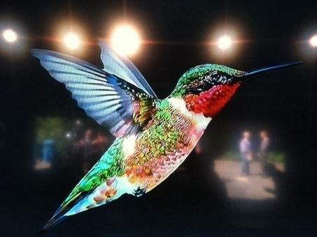 [SEO] Quel impact de Google Hummingbird sur les backlinks ?   SEO-AST COM WEB   Scoop.it