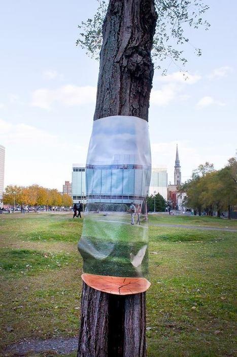 INVISIBLE : Un projet de sensibilisation à l'importance des arbres urbains | Nature en Ville | Scoop.it