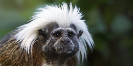 6 Newly Arrived Monkeys Die At Zoo   Animals   Scoop.it