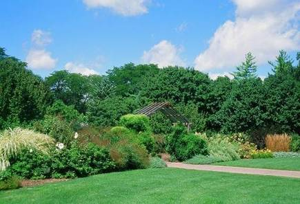 Use native plants to create the feel of a British garden | Native Plants | Scoop.it