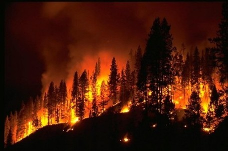 Western U.S. Forest Fires Could Double Within 40 Years | Timberland Investment | Scoop.it