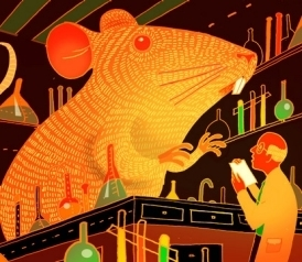 Lab mice: Are they limiting our understanding of human disease?   Food issues   Scoop.it