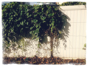 A Great Read: Vertical VegetableGardening   Gardening   Scoop.it