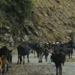 kuenselonline » Blog Archive » Will we work? | BhutanKingdom | Scoop.it